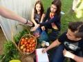 Školski plastenik tokom ljeta i Eko sekcija